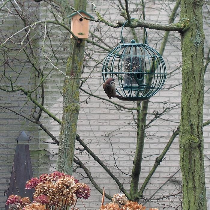 Onze vogelvriendelijke tuin.