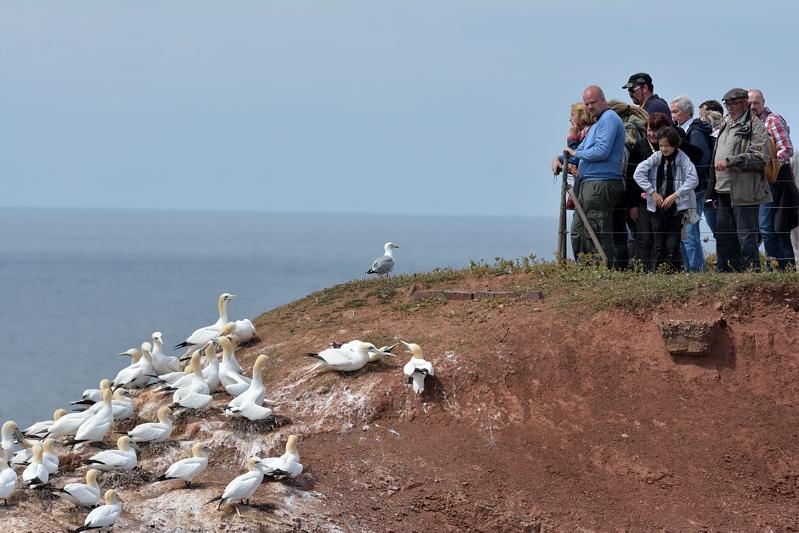 Vogels kijken op Helgoland
