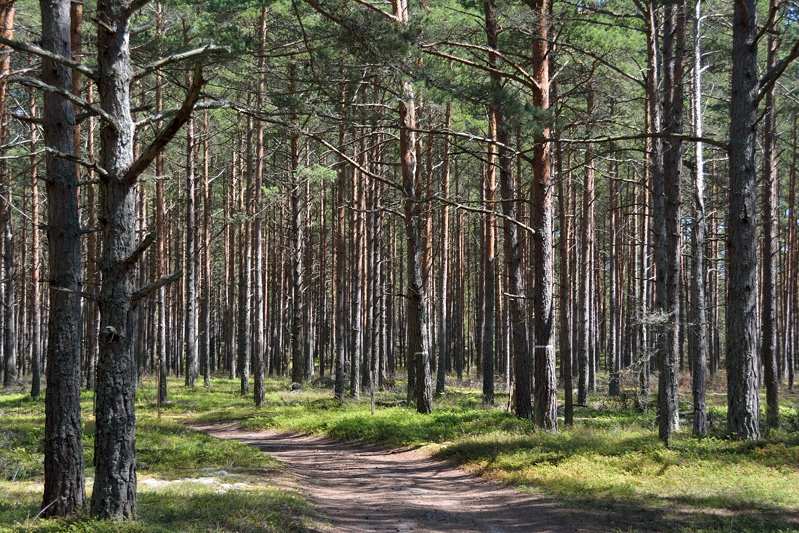 Fietspad door het bos