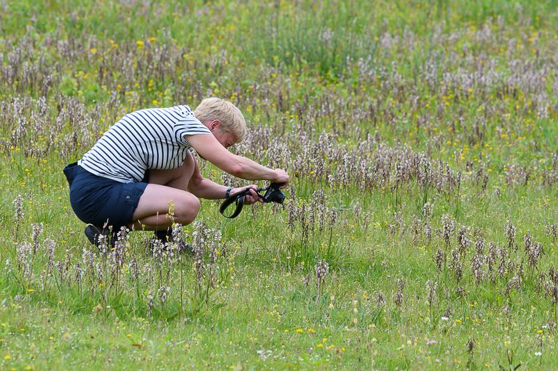 Elly fotografeert de Moeraswespenorchis