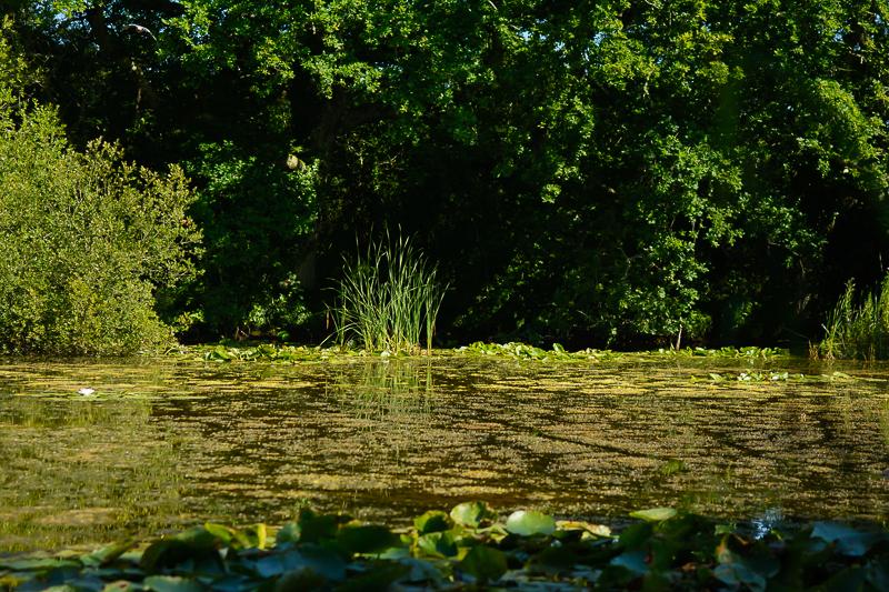 Dodnor Creek