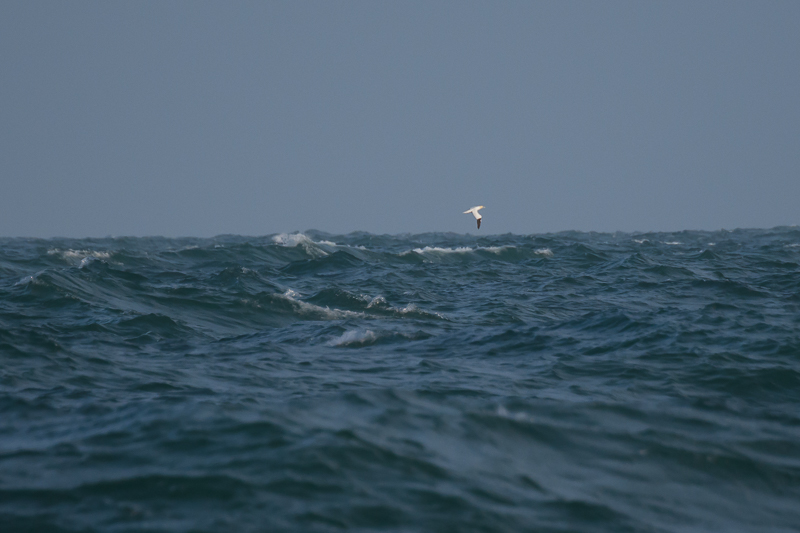 Windkracht 6 op zee