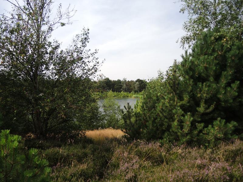 Grindwinning in het bos